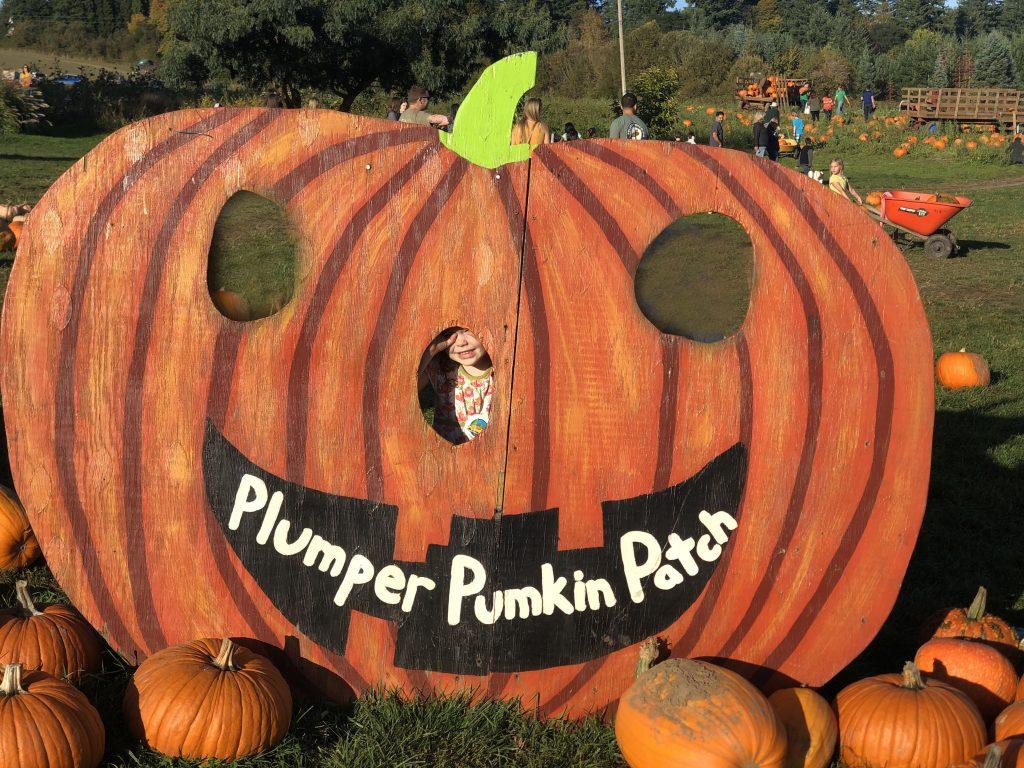 plumper pumpkin patch portland fall bucket list